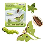 Safari Ltd. Lebenszyklus von A Luna Moth- 4 Stages of Life