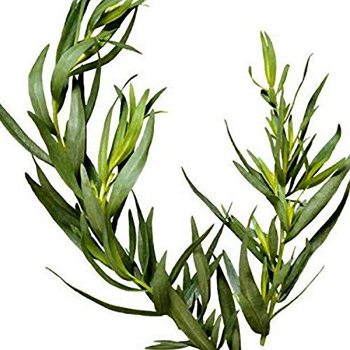 Zoom IMG-3 sapone terapeutico tea tree olio