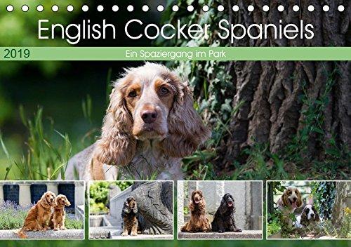 English Cocker Spaniels - Ein Spaziergang im Park (Tischkalender 2019 DIN A5 quer): English Cocker Spaniel im Park auf der Mathildenhöhe (Monatskalender, 14 Seiten ) (CALVENDO Tiere) -