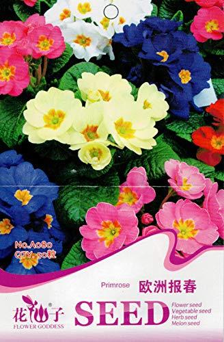AGROBITS Originalpaket 50 Primrose Seeds Primula Vulgaris Hill Blumen A080