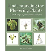 Understanding the Flowering Plants: A Practical Guide for Botanical Illustrators