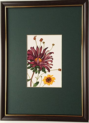 framed-and-mounted-collectable-art-royal-horticultural-society-callistephus-chinensis-by-caroline-ma