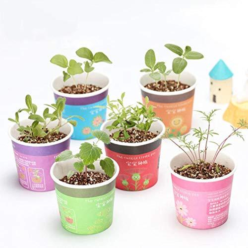 mymotto Blumensamen - Mini Bonsai Pflanzset inkl. Samen & Erde - nachhaltige Geschenkidee für Pflanzenfreunde (Minze)