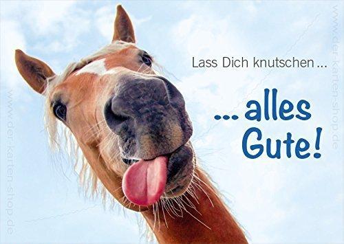 """3 Stück A6 Tierpostkarten Geburtstagskarte Pferdepostkarte lustiges Pferd """"Lass Dich knutschen...alles Gute!"""""""