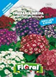 Sementi da fiore di qualità in bustina per uso amatoriale (CINERARIA HYBRIDA GRANDIFLORA IN MISCUGLIO)