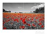 Wallario Herdabdeckplatte / Spritzschutz aus Glas, 2-teilig, 80x52cm, für Ceran- und Induktionsherde, Motiv Mohnblumenfeld- rote Blumen in schwarz-weiß Fotografie