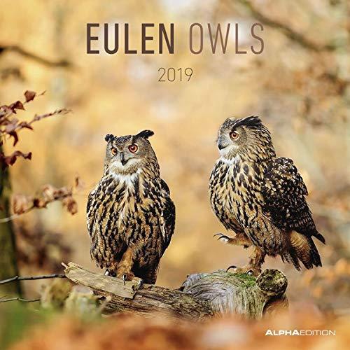 Eulen 2019 - Owls - Broschürenkalender (30 x 60 geöffnet) - Tierkalender - Wandplaner