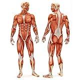 Lacrosse Ball »Lio« (6cm Durchmesser) in vielen Farben zur Massage von Triggerpunkten. Idealer Massageball / Massagerolle zur punktuellen Behandlung von Verspannung & Verhärtungen ähnlich dem Faszientraining (Faszienrolle): gelb -