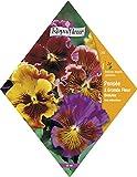 Royalfleur PFRV00255 Graines de Pensée à Grande Fleur Ondulée