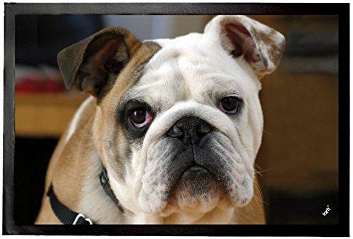 1art1 94279 Hunde - Junge Englische Bulldogge Fuß-/Türmatte, Polyamid/PVC, bunt, 60 x 40 x 0.5 cm