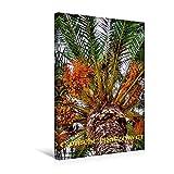 Calvendo Premium Textil-Leinwand 30 cm x 45 cm hoch, Ein Motiv aus Dem Kalender Exotische Pflanzenwelt   Wandbild, Bild auf Keilrahmen, Fertigbild auf Echter Leinwand, Leinwanddruck Natur Natur