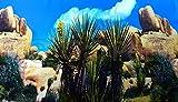 Terrarium Fotorückwand Wüste Reptilien 200x50 Rückwand Folie 200 50 Poster