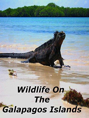 wildlife-on-the-galapagos-islands-ov