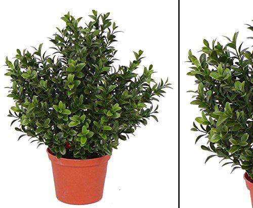 kunstpflanzen-discount.com künstlicher Buchsbusch mit 144 Blätter, UV-beständig - künstliche Blumen Kunstblumen Seidenblumen