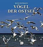 Bildband Vögel der Ostsee - Rico Nestmann