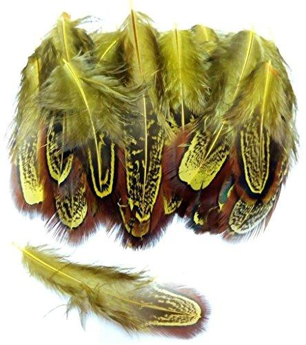 ion Hahnfeder fasan Feder 50 stück, 4-7cm läng, Ideal für Kostüme, Hüte, basteln, Zuhause Dekor, DIY gelb (Kostüm Diys)