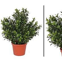 Kunstpflanzen Discount suchergebnis auf amazon de für kunstpflanzen außenbereich
