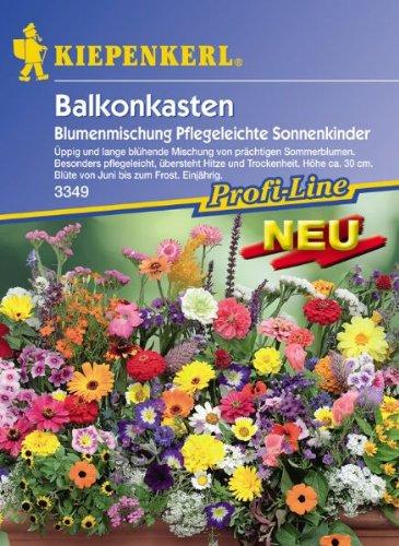 """Balkonkasten-Mix \""""Pflegeleichte Sonnenkinder\"""""""