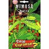 Vivai Le Georgiche Mimosa Pudica (Semente)