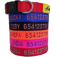 Holly mascotas Collar de Perro Personalizado, de 24 a 72h lo tendrás en casa ,