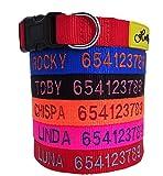 Holly mascotas Collar de Perro Personalizado, Envios Desde España, Bordados Nombre y Numero De Teléfono.