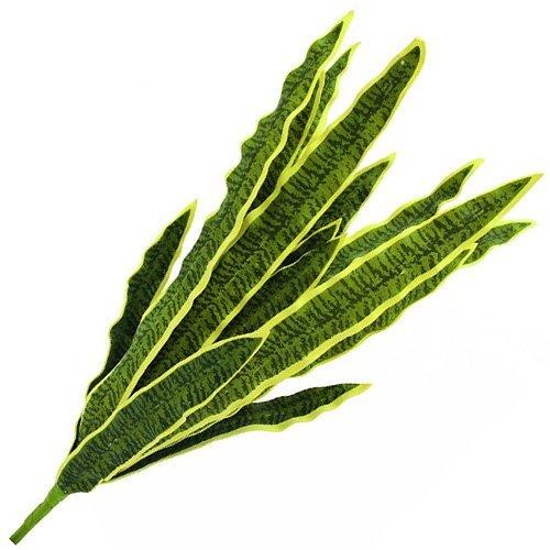 Euro Palms 82530579Sansevieria, Eva, 74cm, Verde/Giallo