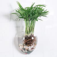 Artlass Pack of 2 Wall Hanging Crystal Glass Flower Vase Planter Terrarium Container Flower Pot