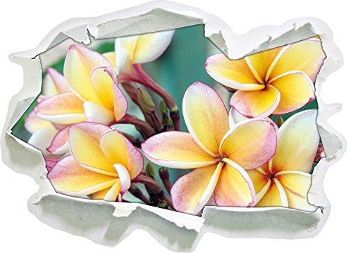 monoi fiori alle Hawaii, di carta 3D autoadesivo della parete formato: 62x45 cm decorazione della parete 3D Wall Stickers parete decalcomanie
