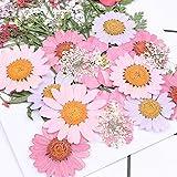 Cassiela Hochzeit Getrocknete Blumen Dekoration DIY Rosa Vielzahl Von Geprägten Trocken Blumen Mit Material Paket