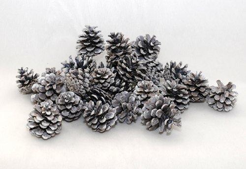 Erbe Essiccate Pommes de pin naturelles Bain de couleur blanche 500 g