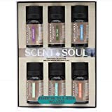 Scent and Soul 100% Pure Essential Oils – Top Picks Set of Aromatherapy