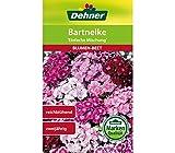 Dehner Blumen-Saatgut, Bartnelke,