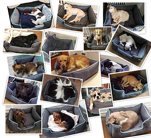Zoom IMG-2 cuccia per cani sfoderabile cuscino