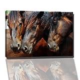 Pferde Bild auf Leinwand -- 120 x 80 cm fertig gerahmte Kunstdruckbilder als Wandbild - Billiger als Ölbild oder Gemälde - KEIN Poster oder Plakat