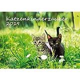 Katzenkinderzauber · DIN A3 · Premium Kalender 2019 · Katzenkinder · Katzenbabys · Katzen · Stubentiger · Tier · Edition Seelenzauber
