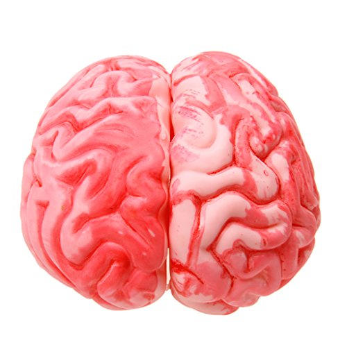Halloween Gehirn Kunststoff Gehirn Modell Halloween Deko Horrorartikel Horror Grusel Dekoration ()