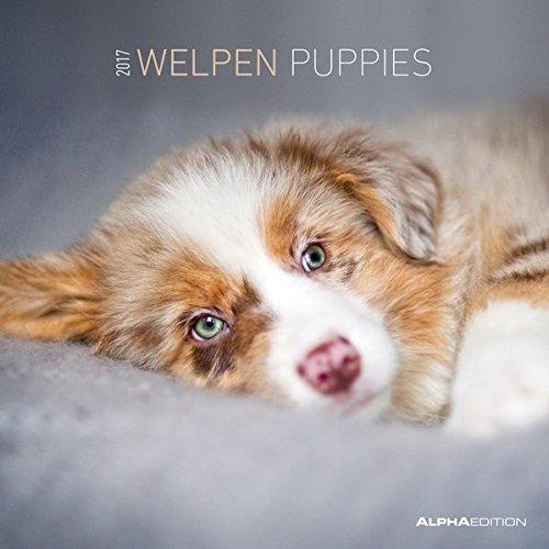 Welpen 2017 - Puppies - Hundebabys - Broschürenkalender (30 x 60 geöffnet) - Tierkalender - Wandplaner