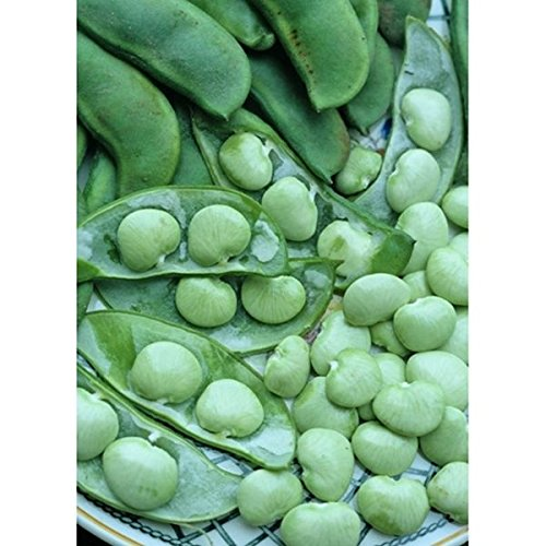 Shoopy Star 15+ Bulgarian Carrot Pepper Samen (hot Bio-Chili, Chili) für Salsa Groß