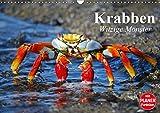Krabben. Witzige Monster (Wandkalender 2019 DIN A3 quer): Kleine Aliens zum genaueren Betrachten (Geburtstagskalender, 14 Seiten ) (CALVENDO Tiere)