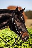 Trensen-Zaum Standard Leder für Pony, schwarz K32170 top Qualität