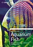 Goldfish Filters - Best Reviews Guide