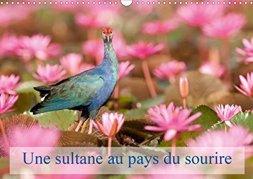 Une sultane au pays du sourire 2020: La taleve sultane est un oiseau qui vit surtout dans les roselieres. En Thailande on la rencontre, a certaines periodes, dans les grands champs de nenuphars roses.