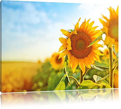 Sonnenblumen Sonnenblumenfeld Sonnenblumenkerne Sonnenschein Format: 60x40 cm auf Leinwand, XXL riesige Bilder fertig gerahmt mit Keilrahmen, Kunstdruck auf Wandbild mit Rahmen, günstiger als Gemälde oder Ölbild, kein Poster oder Plakat (Sonnenblumenkerne Original)