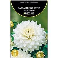Bulbos - Dalia Decorativa blanco puro - Batlle