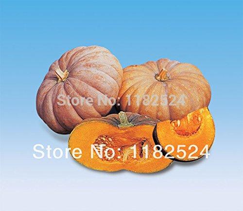 Vietnam sélectionnés graines de courge de haute qualité seins suspendus melon graines de légumes Fun pour le jardin de la maison de bricolage, 50 graines / Lot, # GB78HK