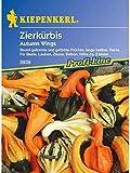 Cucurbita pepo Zierkürbis Autumn Wings Mischung
