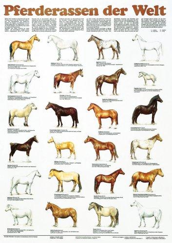 Schreiber Naturtafeln, Pferderassen der Welt