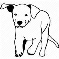 Labrador Retriever. Nutrition and Training