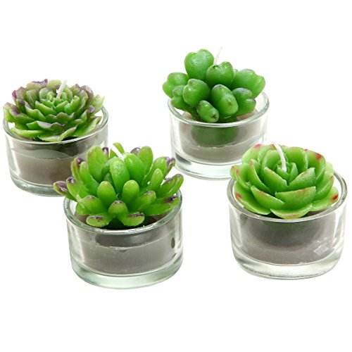 (Sortiment von 4Mini Grün Desert Sukkulenten geformte Kerzen/Teelichter Tisch/Mantel Dekorationen)