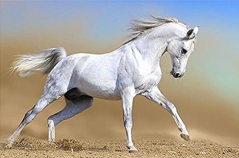 Startonight Impression Sur Verre Acrylique Cheval Arabien, Imprimée Tableau Oeuvre